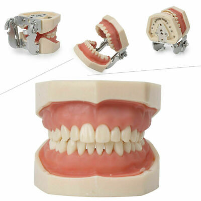 Kilgore Nissin Type Dental Typodont Model 200 Removable 28 Teeth Soft Gingiva