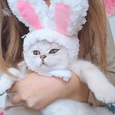 Katze Hase Kaninchen Ohren Hat Cap Pet Cosplay Kostüme für Katze kleine Hun F0A1