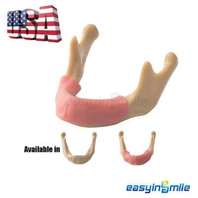 Dental Lower Jaw Teeth Anatomically Bone Mandible Study Model Gum Easyinsmile
