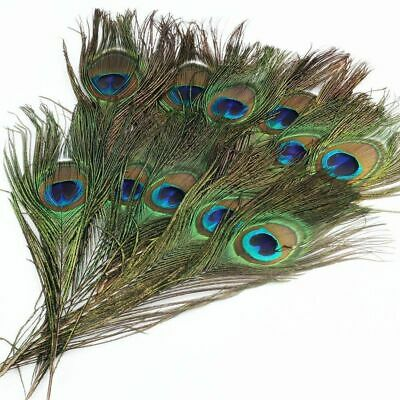 Real Natural Peacock Tail Eyes Feather 10-12 Inches Wedding Party Home Decor - Peacock Party