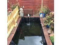 Pond filter, pond pump, koi, fish and more £100 cheap bargain!