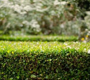 Sustain Lawn and Garden care Adelaide CBD Adelaide City Preview