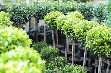 A Grade Plants! Fantastic Prices! Premier Private Nursery! Springwood Logan Area Preview