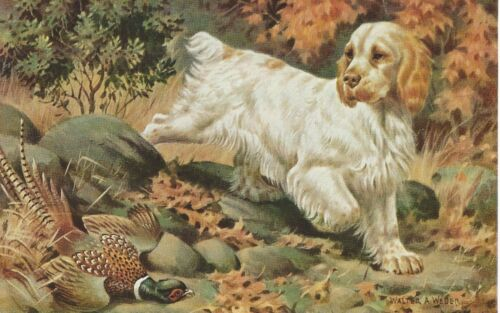 Clumber Spaniel - Vintage Color Dog Print - MATTED