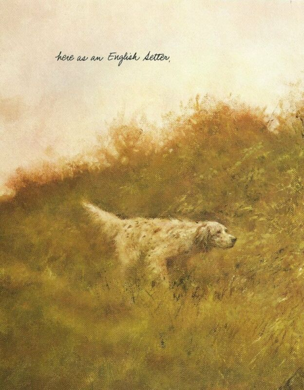English Setter - Vintage Dog Print - Poortvliet