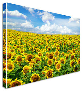 Sunflower-Field-Yellow-Floral-Flower-Canvas-Print-Large-Any-Size