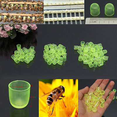 100PCS Beekeeping Cell Cups Royal Jelly Cups Set Queen Bee Rearing Equipment ()