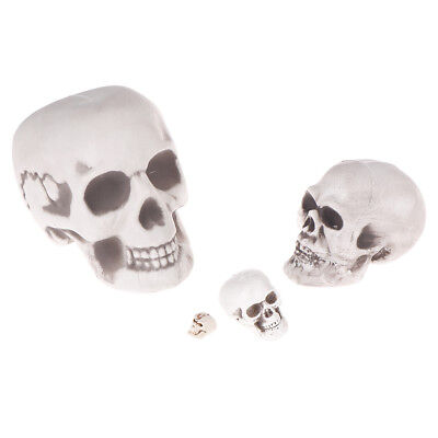 Scary man plastic skull prop skeleton head halloween party supplies gif BLUS