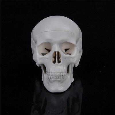 Lehre Mini Schädel Mensch Anatomische Anatomie Kopf Medizin Modell Tn