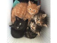 Kittens ready to go weekend 8 weeks