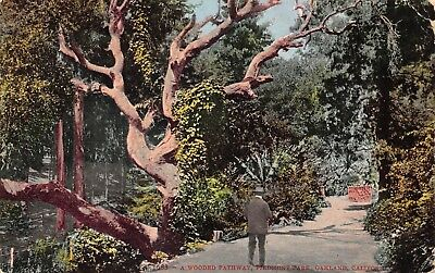 Oakland California 1908 Postcard A Wooded Pathway Piedmont Park  for sale  Shipping to Canada