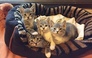 URGENT URGENT RESCUED STUNNING SIBLINGS FOR LOVING HOMES