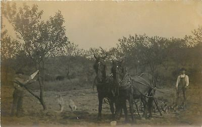 Farmer Discing Behind Horses~Man With Saw Prunes Tree~Dog Watches~c1911 RPPC