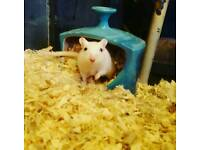 Gerbils with all accessories!
