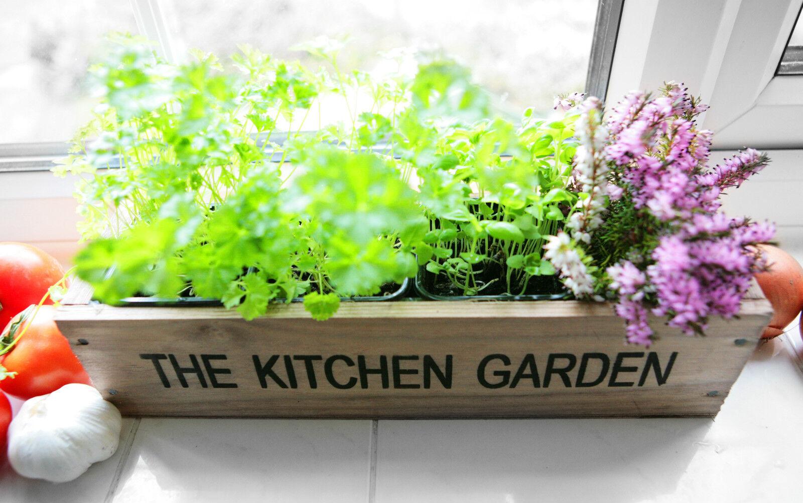 Kitchen Windowsill Herb Garden Kitchen Herb Garden Windowsill Planter With Seeds 1xbasil1x