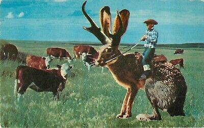 "Giant Jackalope Cattle Roundup Time Postcard 3.5"" x 5.5"" Comic Cowboy Novelty"