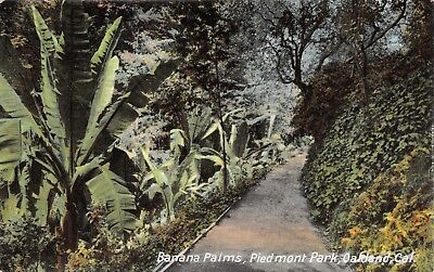 OAKLAND CALIFORNIA PIEDMONT PARK~BANANA PALMS-NEWMAN PUBL POSTCARD 1910s for sale  Shipping to Canada