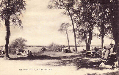 Red Point Beach, North East MD, Picnic Sailboats Shady c1938 Photo Postcard F17