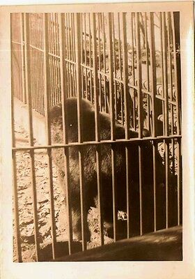 Old Vintage Antique Photograph Gorilla In A Cage