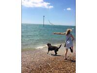 Kelly's Dog walking, Doggie Daycare & Boarding