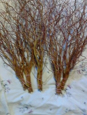 CURLY WILLOW BRANCHES NEW DRIED 5 BUNCHES  REDDISH BROWN WOOD