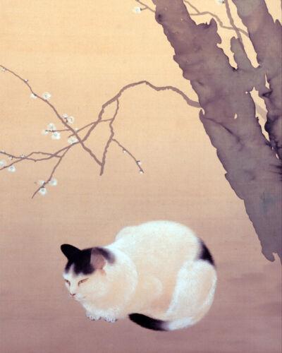 Black & White Pet Cat Under Japanese Plum Tree Animal Art Real Canvas Print