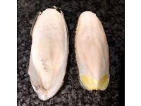 Cuttlefish Bone, Cuttlebone, Cuttle Bone for budgies, parrots, reptiles etc.