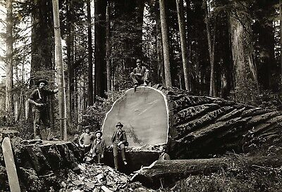 Redwood Sequoia Logging Photo Big Logs Sequoia National Park California