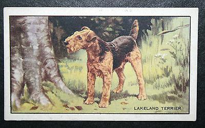 Lakeland Terrier   Original 1930's Vintage Illustrated Card # VGC