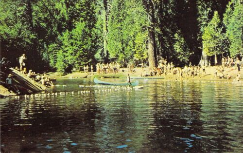 CA Arnold BOY SCOUTS of AMERICA CAMP WOLFEBORO Canoeing River postcard BS5
