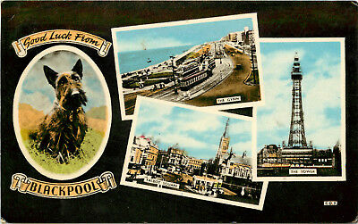 Postcard Multiview Vignette Blackpool Talbot Square The Tower & Gynn Terrier Dog