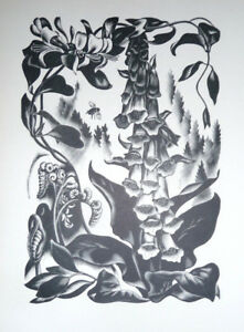 AGNES MILLER PARKER- Foxgloves, Honeysuckle - Print after Wood Engraving - 1936.