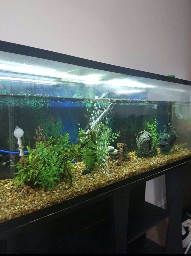250 litre fish tank in darlington county durham gumtree. Black Bedroom Furniture Sets. Home Design Ideas