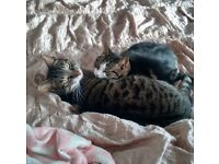 Two Cats Missing!!!