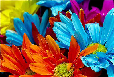 Wandaufkleber Aufkleber Deko: Blumen Farbe - Ref 1467 (16 Größe)