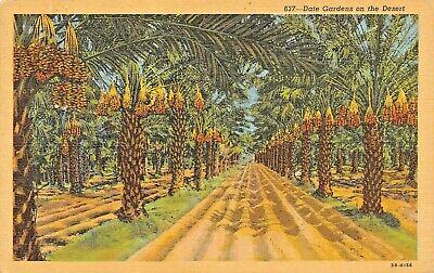 Date Gardens On The California Desert Postcard