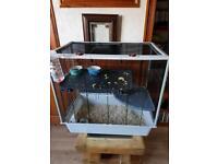 Pet rats & cage