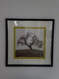 Large square tree picture in black/silver coloured frame