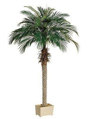 - 68 inch Artificial Silk Phoenix Palm Tree in Pot Shown Areca 70 Date 5 7 6 Sago