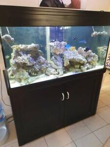 Aqua One Marine Fish Tank