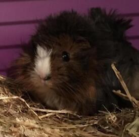 Piggy Needs a Loving home