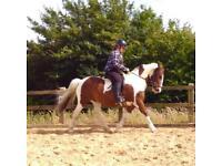 Striking coloured gelding for sale
