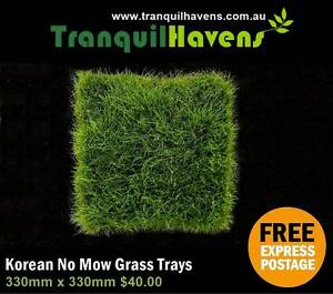 Trays of Korean Petting Grass (No Mow) $40 per Tray Free Postage Brisbane City Brisbane North West Preview