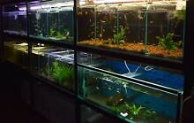 Tropical Fish For Sale!! Prices as per list. Melton Pick up. Melton Melton Area Preview