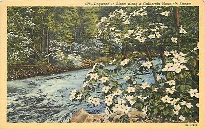 Linen Postcard CA G482 Dogwood in Bloom along a Calif Mountain Stream 1940 (Dogwood Ca)