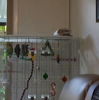 Reduced price !! Love birds for sale