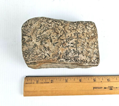 """UNUSUAL 5.5"""" X 4"""" GRAPTOLITE FOSSIL DUAL LAYERED FOSSILIZED BOOK-SHAPED ROCK!"""