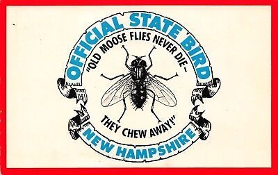 VTG POSTCARD MOOSE FLIES NEVER DIE NEW HAMPSHIRE STATE BIRD FLY HUMOR JOKE / A38
