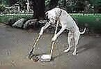 Our Furry Friends Dog Waste Yard Maintenance Service