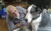 Bill Thomas Dog Trainer - Doggy Rehab Tas Dodges Ferry Sorell Area Preview